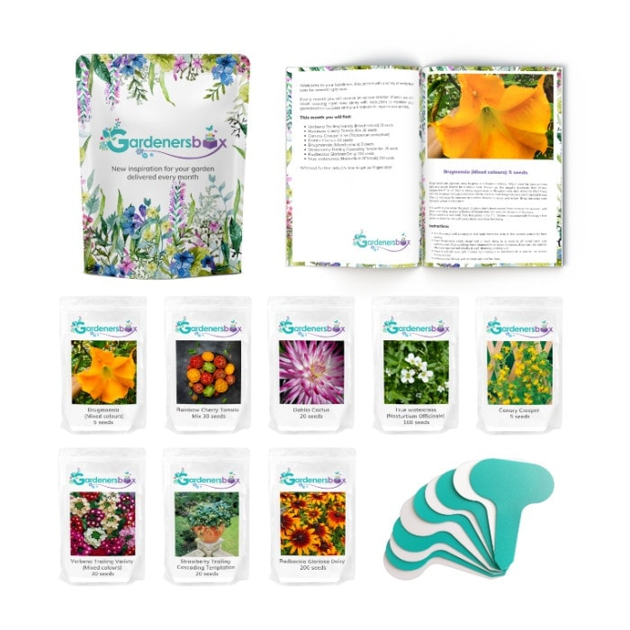 Whats in Box Small Square border - What flower seeds to sow in May - Inspiration & Growing guide